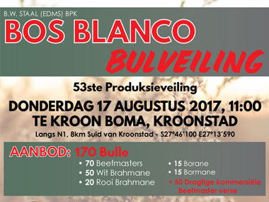 Bos Blanco Auction