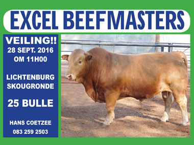 Excel Beefmasters Auction