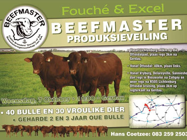 Excel and Fouche Beefmaster Auction