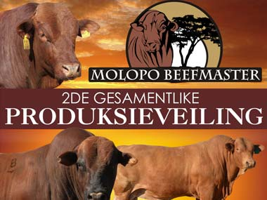 Molopo Beefmasters Auction