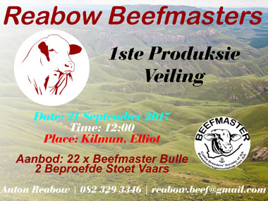 Reabow Beefmaster Production Sale