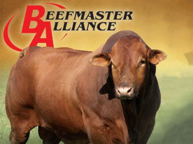 Beefmaster Alliance -