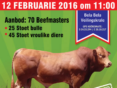Limpopo Beefmaster Auction